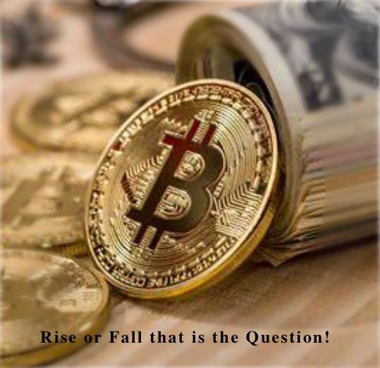 bitcoin will it rise or fall